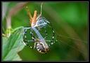 Insectes autres invertebres