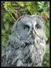 Oiseaux Parc Villars les Dombes